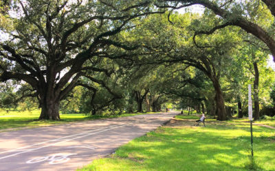 Best Parks Around New Orleans
